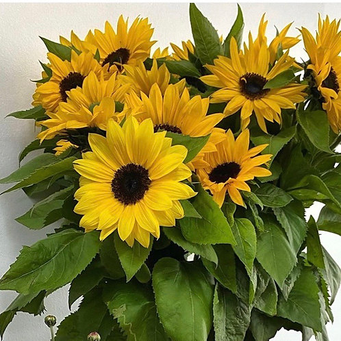 Sunny Sunflowers (1 Bunch)