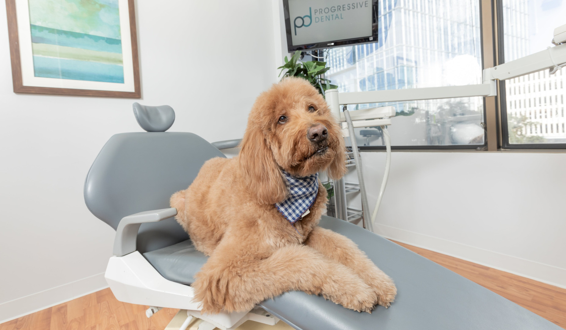 dental pet therapy