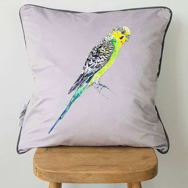 Budgies next to be made into cushions 🦜