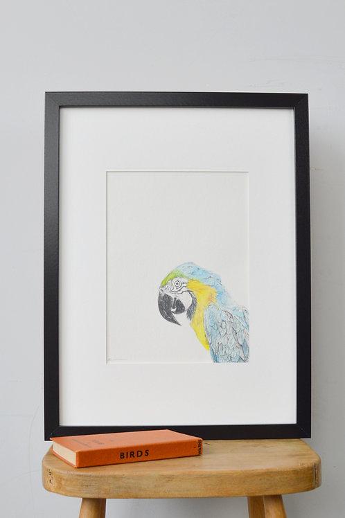 framed parrot drawing