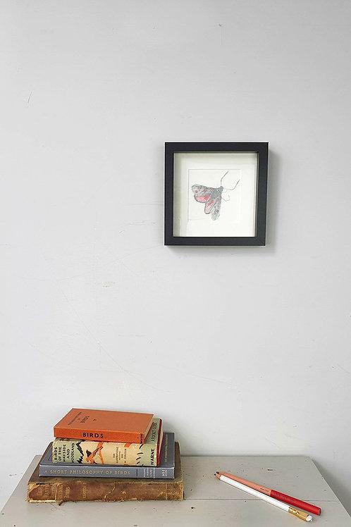 burnet moth pencil drawing