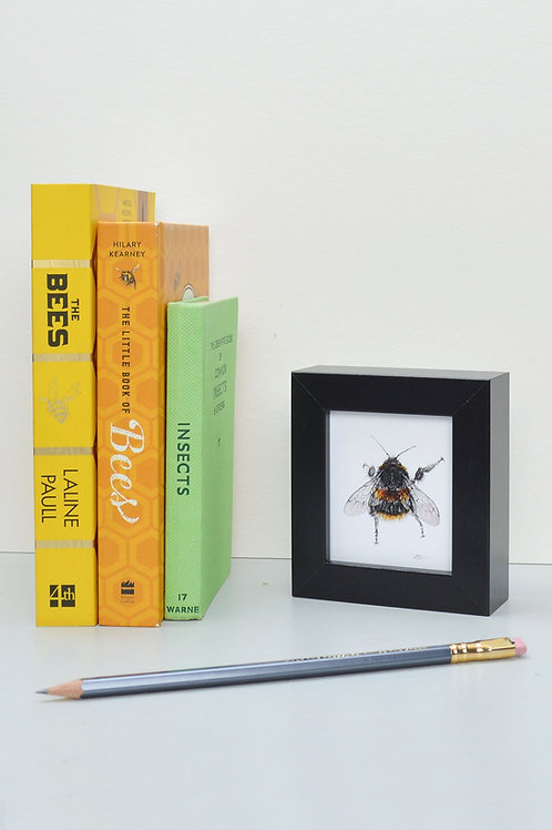 tiny wee framed bee print