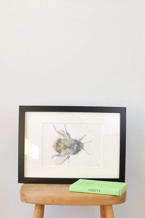 Bee pencil drawing