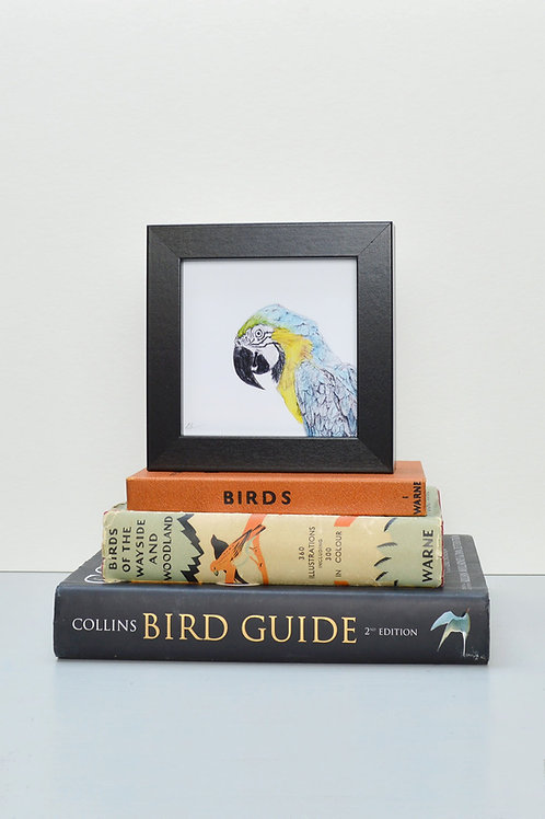 tiny wee square framed parrot print