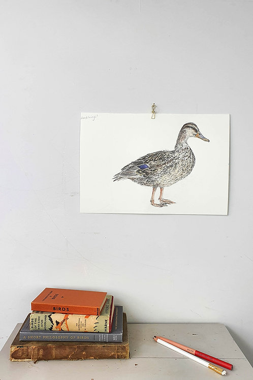 mallard duck drawing