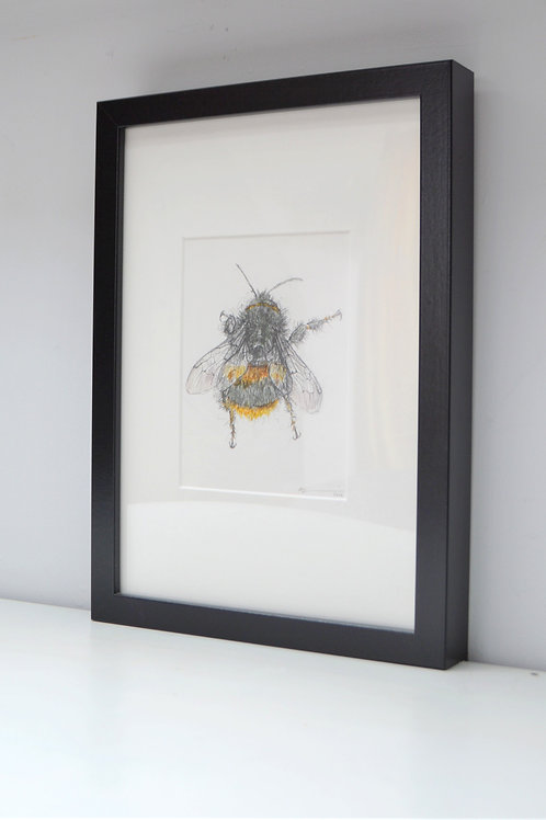 bee pencil drawing