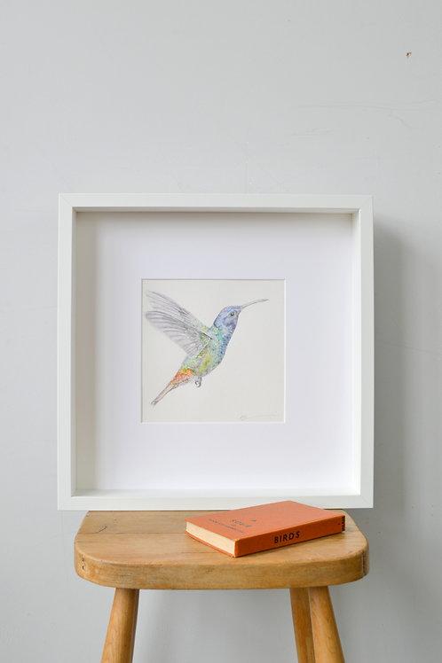 framed hummingbird drawing