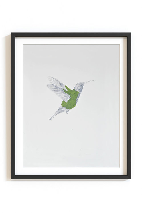 green hummingbird screenprint (unframed)