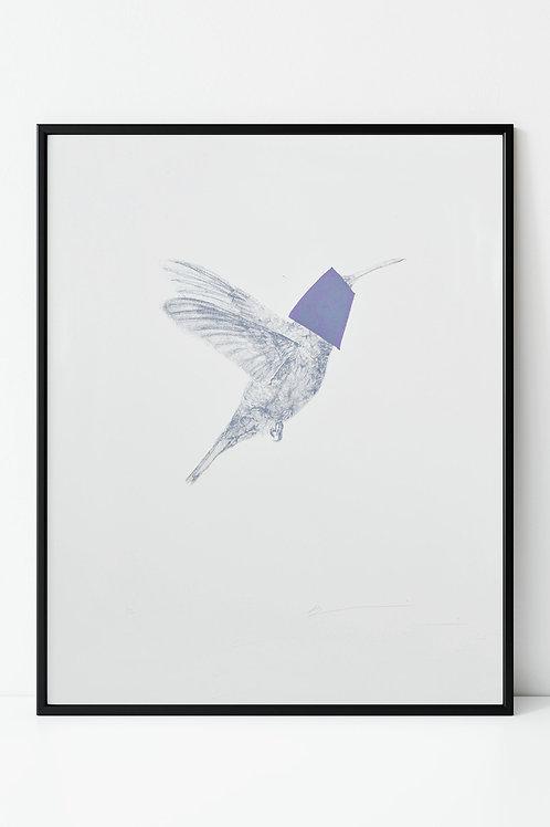 purple hummingbird screenprint (unframed)