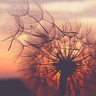 Ballast meegeven aan de wind