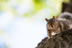 anonymous squirrel