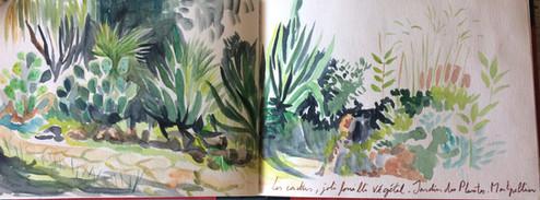 Cactus, jardin botanique Montpellier