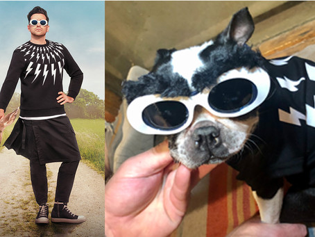 Schitt'$ Creek David Rose DIY Dog Halloween Costume