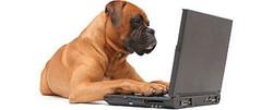Smelly Dog Blog