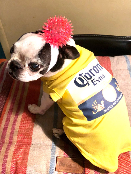 Coronavirus DIY Dog Halloween Costume
