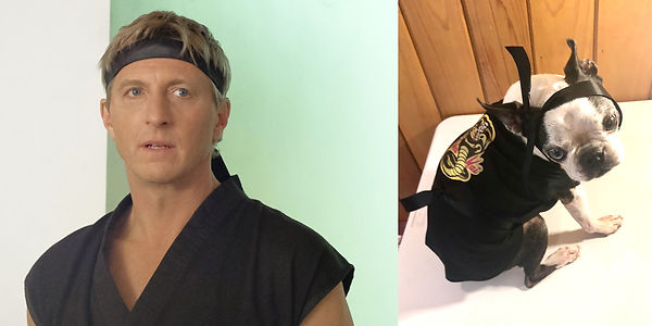 Dog Costume Cobra Kai.jpg