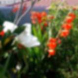 Gladiolos y magnolios en una terraza