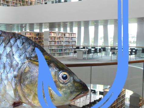 University IT warn of new 'Fishing' scandal
