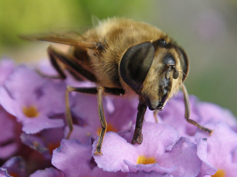 Insect Population Falling at an Alarming Rate