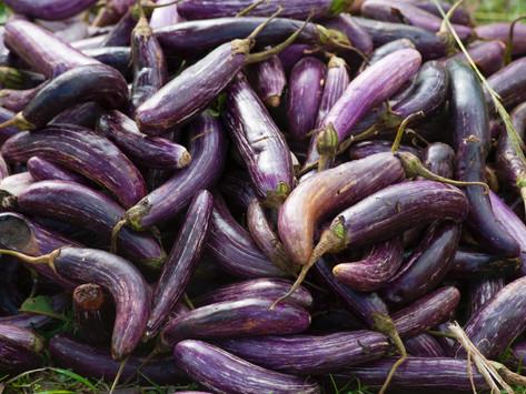 Kashke: How The Iranians Utilise Eggplant