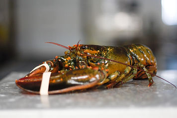 Nova Scotia Lobster Captain's Choice