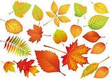 leaf-3256011_1920.jpg