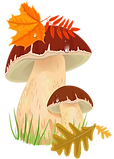 kisspng-edible-mushroom-autumn-fungus-cl