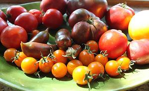 tomate1.jpg