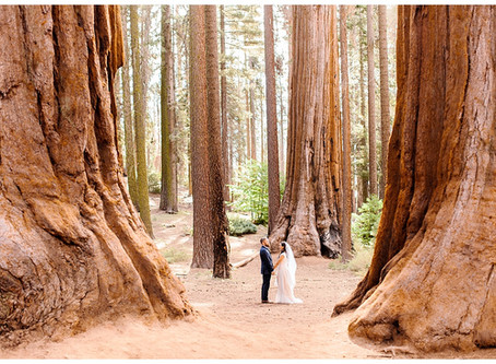 Round Meadow Elopement at Sequoia National Park, California | Cayne and Anne