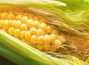 The Magic Of Corn Silk