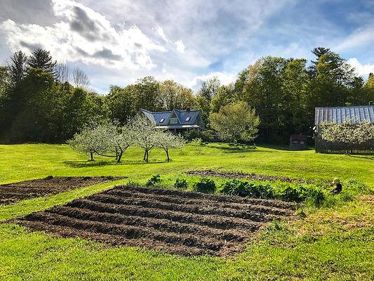 homestead_frugalwoods_land_view_baby.jpg