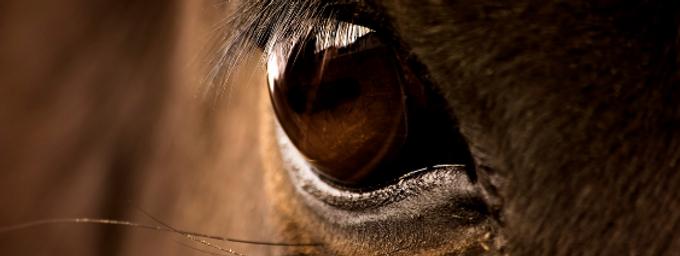 A vassoura e o cavalo