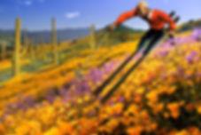 Spring Skiing, Sara Weiss_.jpg