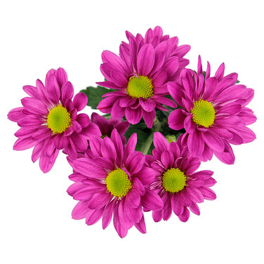 Daisy Purple Lolita