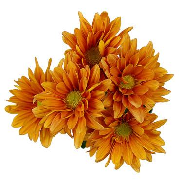 Daisy Reagan Orange