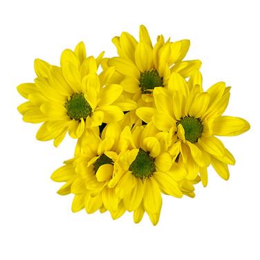 Daisy Radamel Yellow