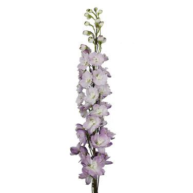 Delphinium Triton Lavender
