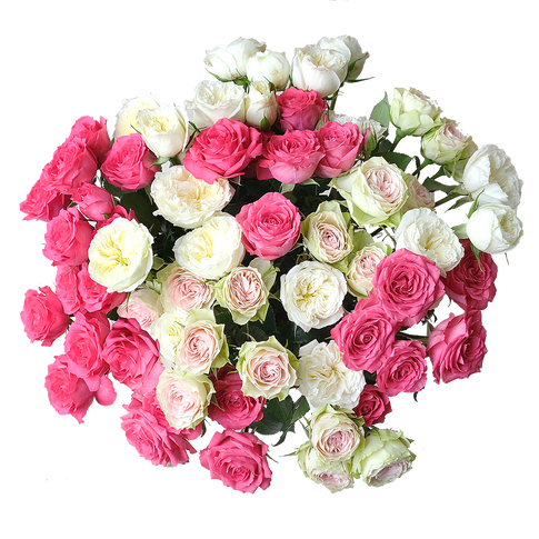 Premium Bellalinda Spray Roses