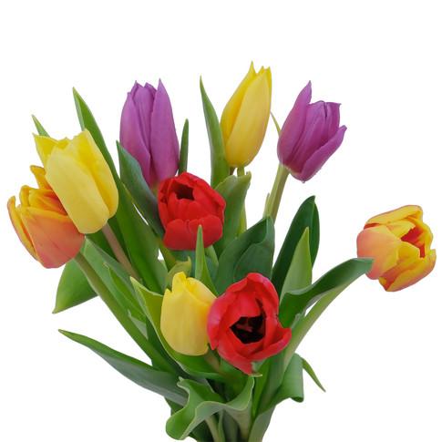 Tulip Fall Pack