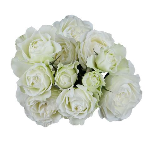 Garden Rose Blanche Spray