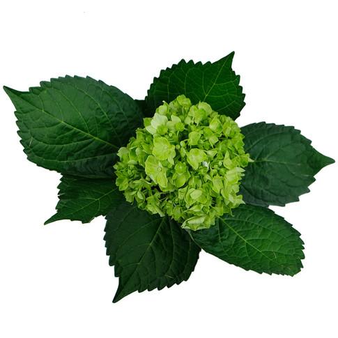Mini Lime Green
