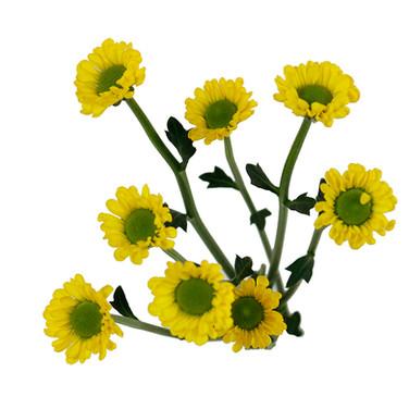 Santini Yellow Juicy