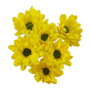 Daisy Yellow Minion
