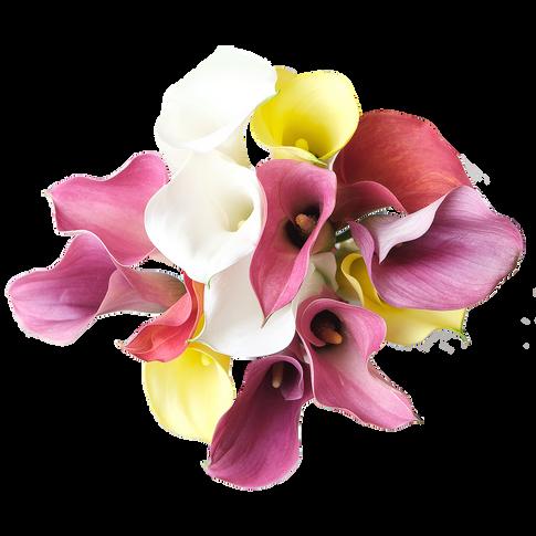Callas-Color Prime Fresca Gold