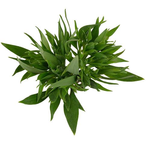 Alstroemeria Green Planet