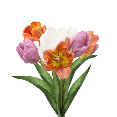Tulip Parrot Assorted