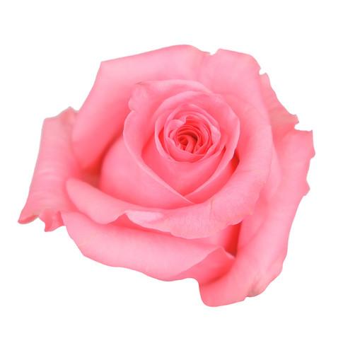 Rose Opala