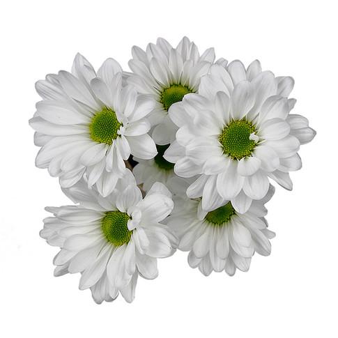 Daisy Alma White