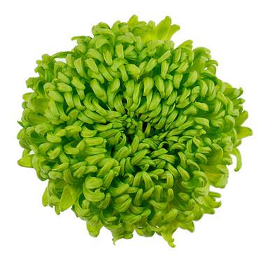 Bombellini Green