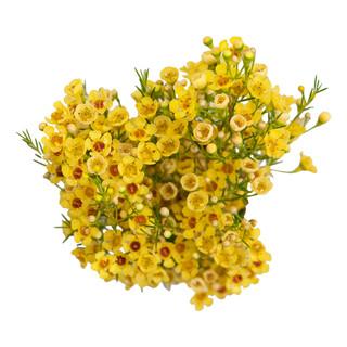 Candy Corn Yellow